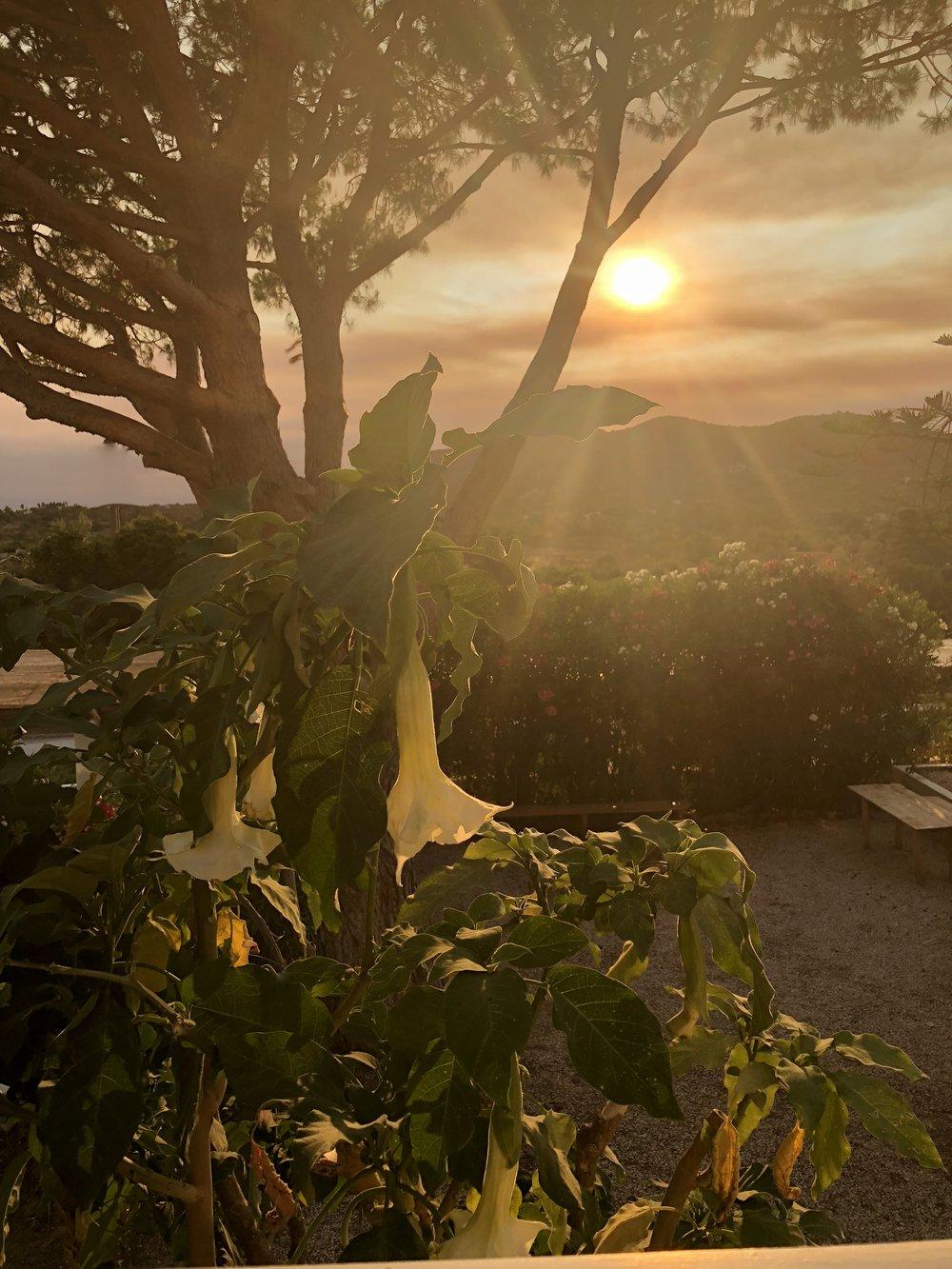 The Caftan Clique/Vila Monte Farm House - Bohemian Rhapsody