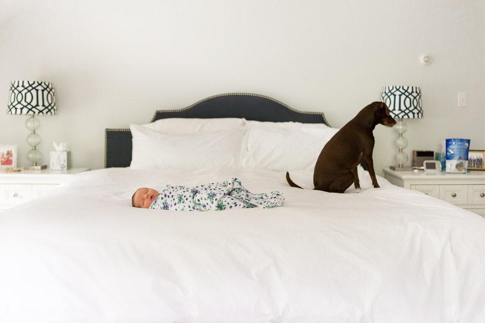 Dover MA Baby Photographer-01.jpg