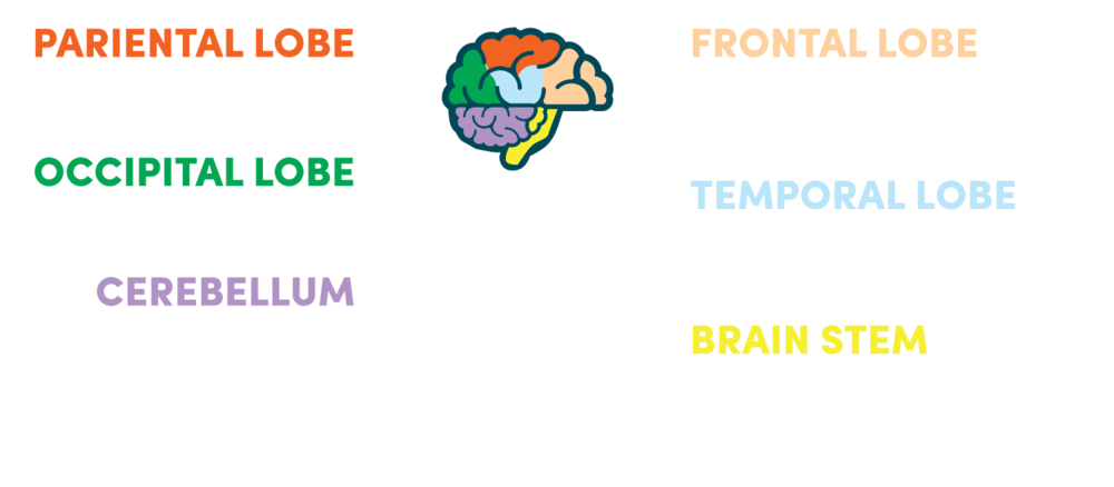 CLAY_Illustrations_Brain.png