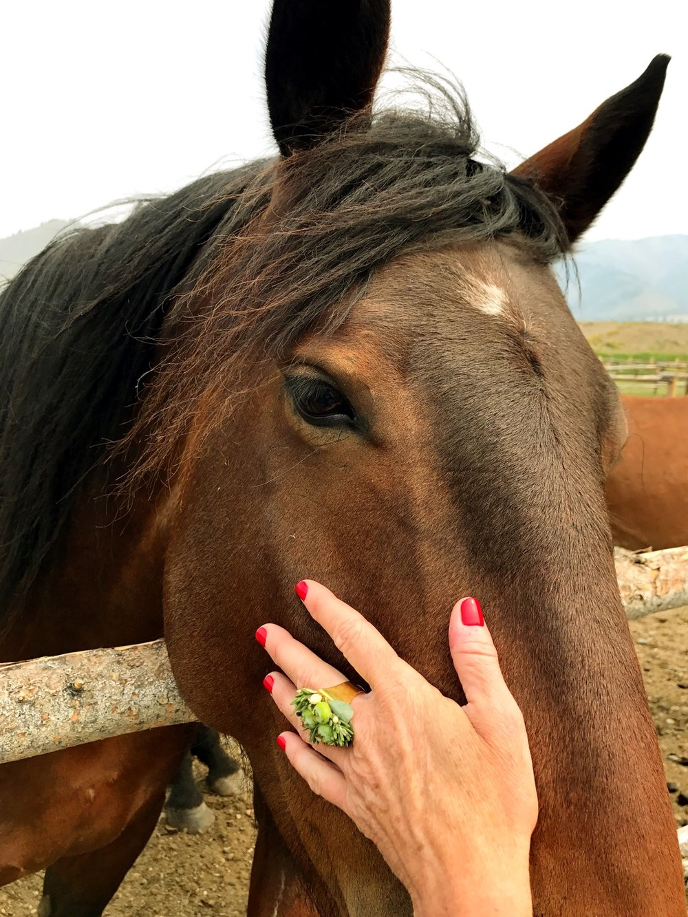 Floral Ring Horse.jpeg
