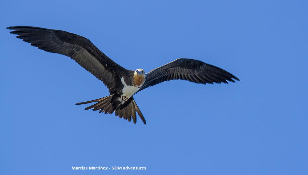 socorro bird.jpg