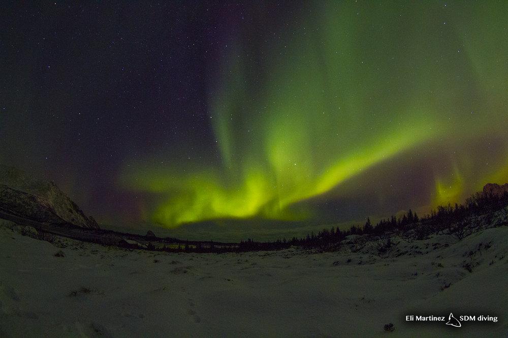 aurora 4.jpg
