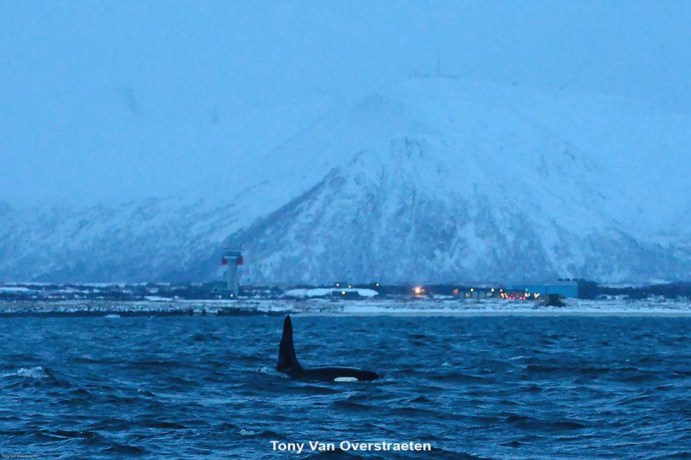 orca 1.jpg