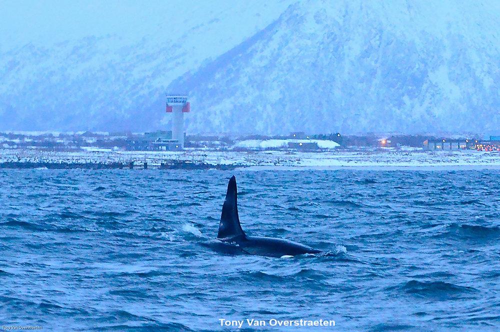orca 6.jpg