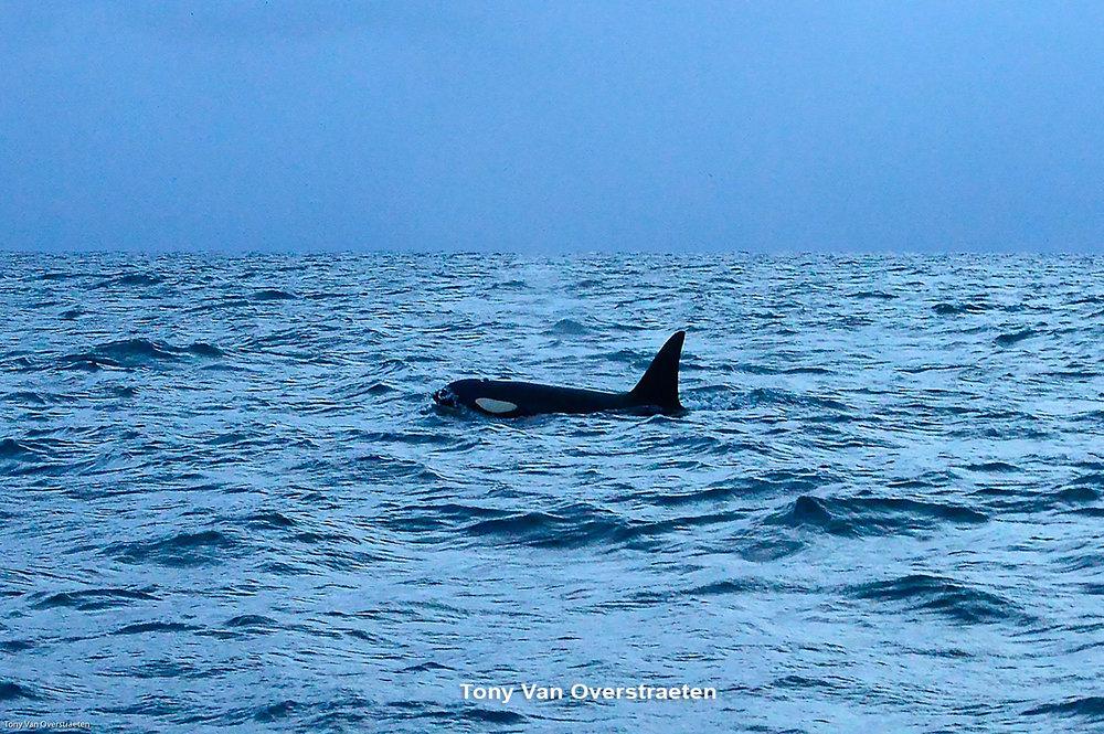 orca 8.jpg