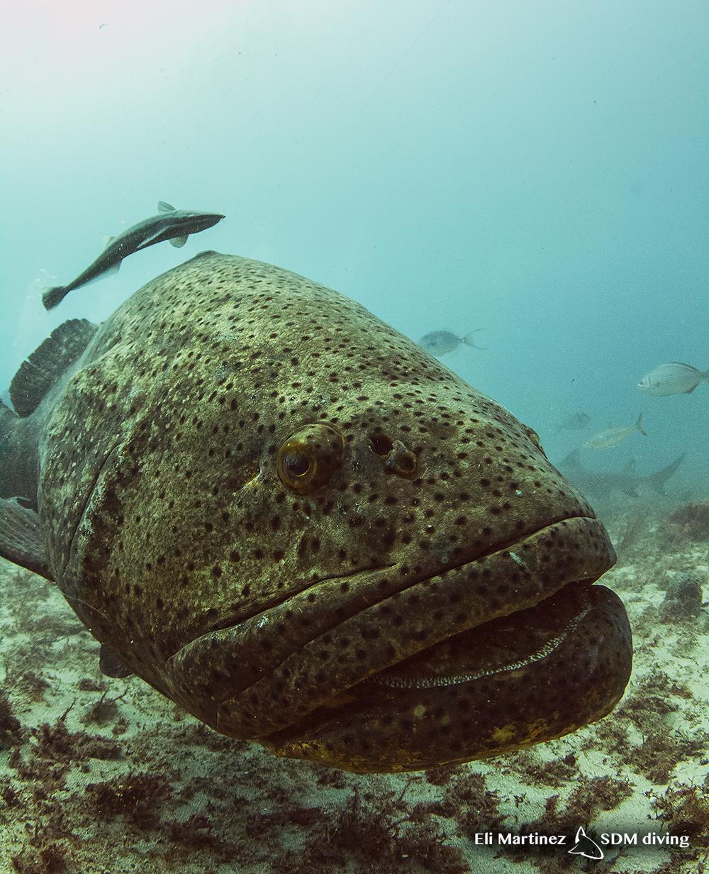 grouper 3.jpg