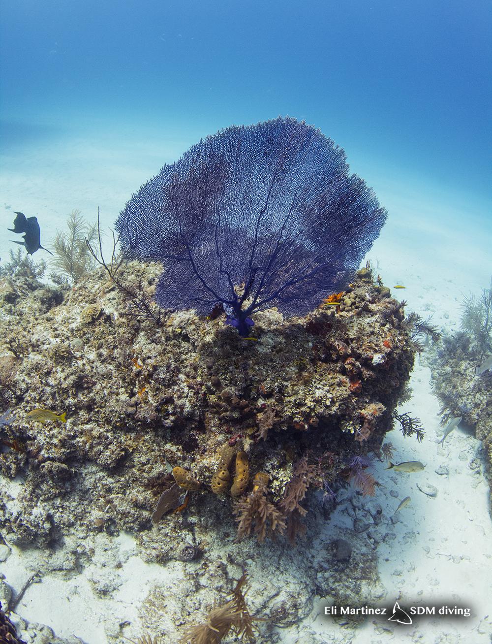 reef TB.jpg