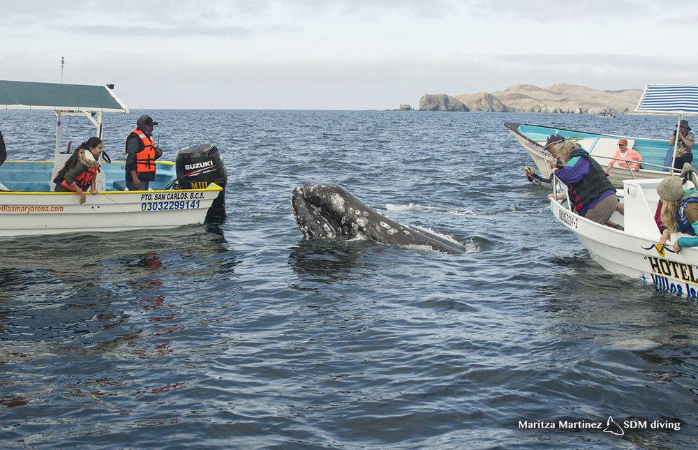 topside whale 2.jpg