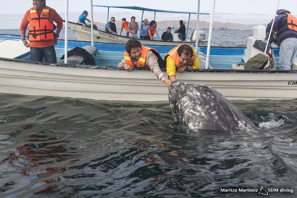 Topside whale.jpg