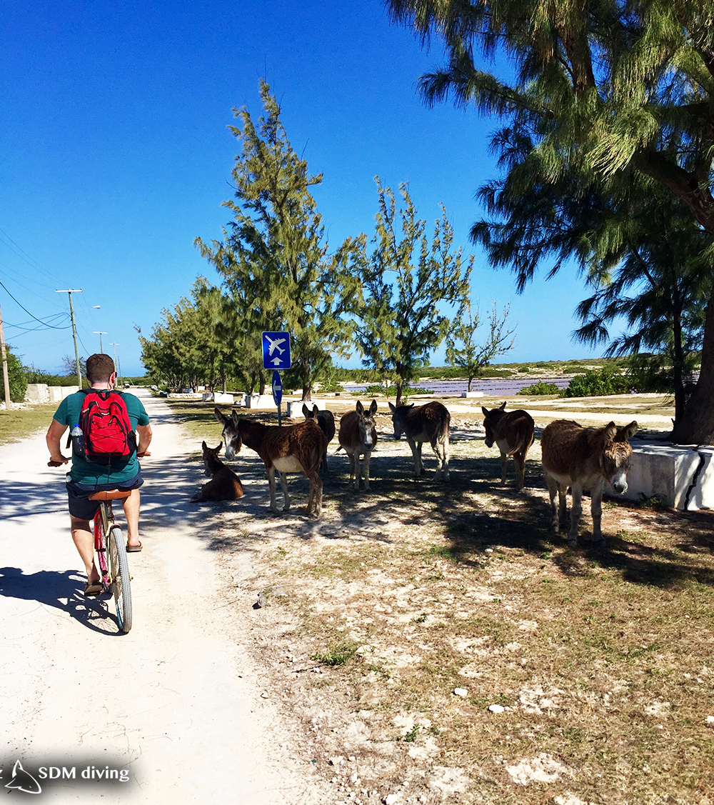 On our weather day, we went on a bike ride to explore Salt Cay, ran into out donkey friends. They were hiding from the afternoon sun in the shade.