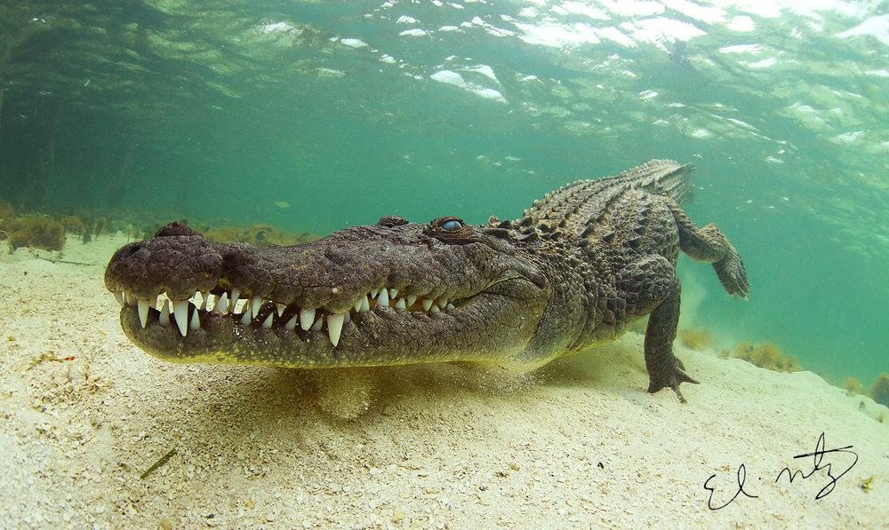 croc 4.jpg