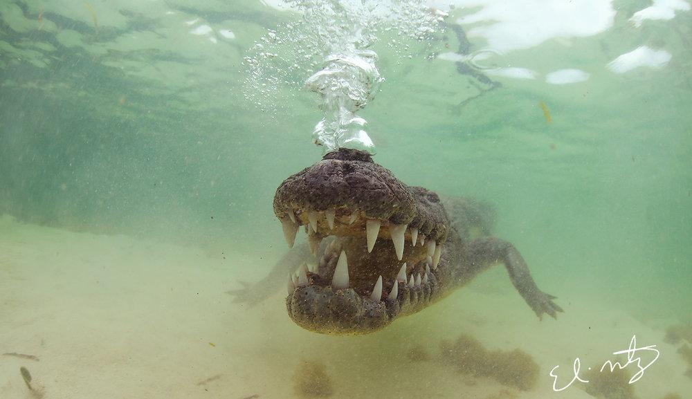 croc bubbles.jpg
