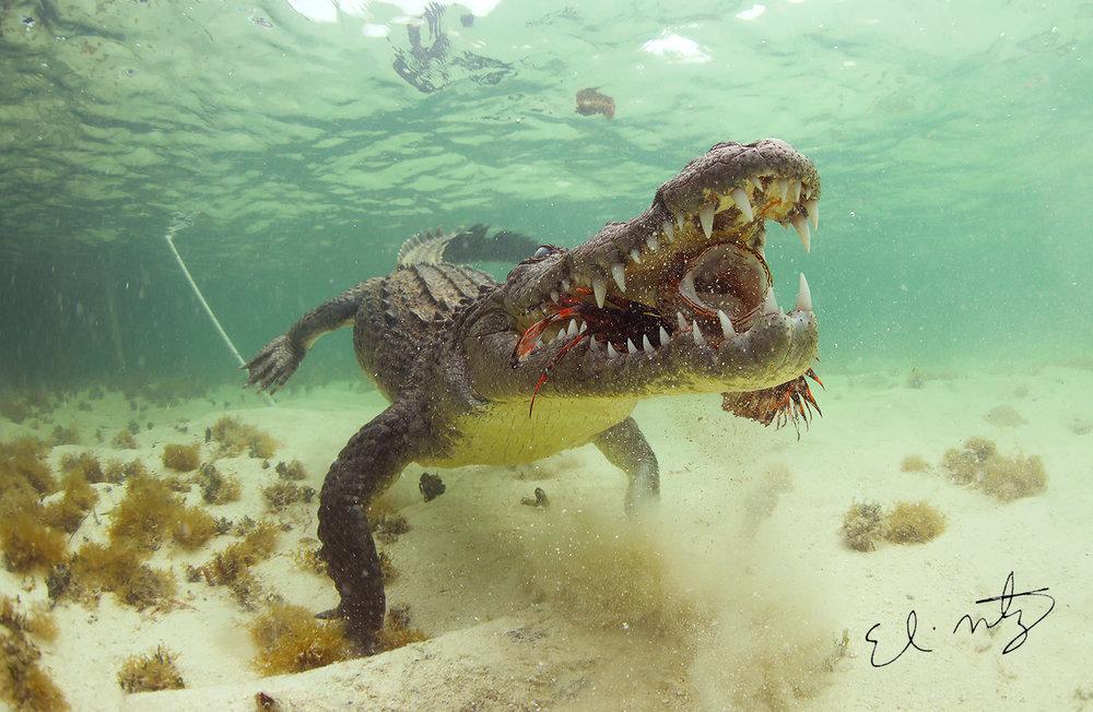 crocs 2.jpg