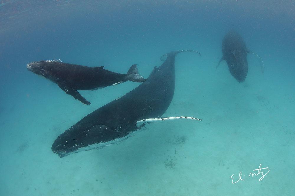 whale 4 edit.jpg