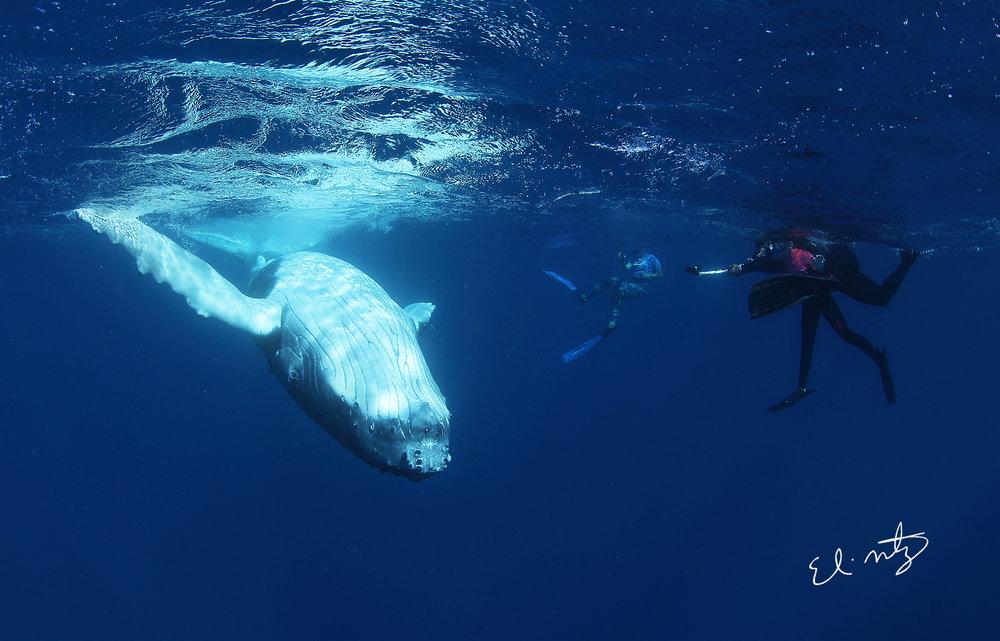 mari sophia whale.jpg