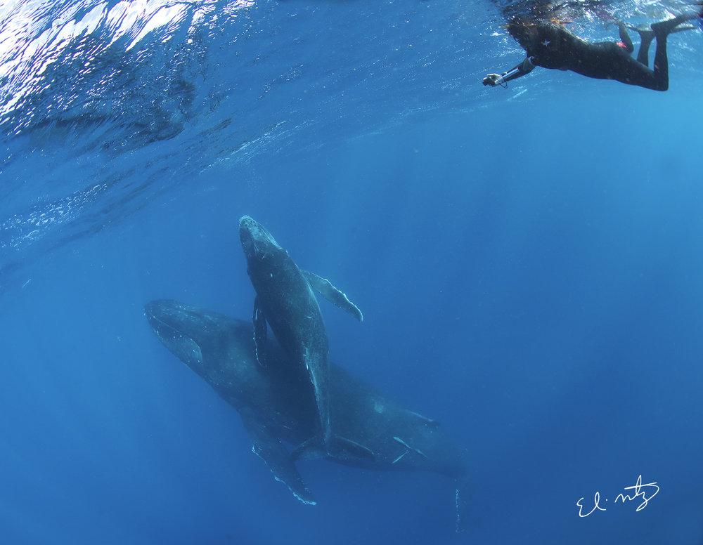 mari and whales.jpg