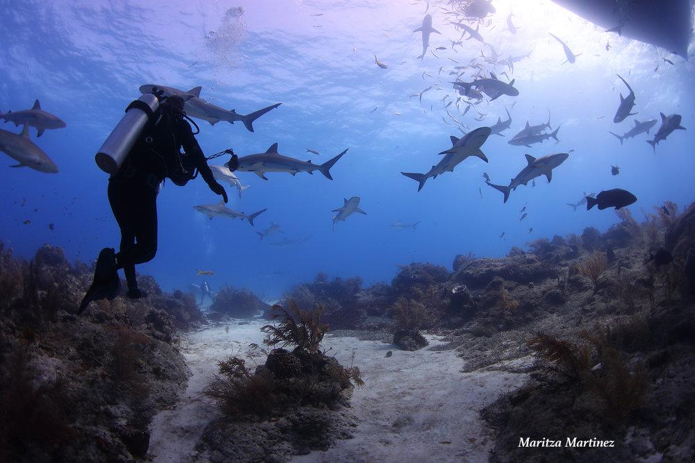 reef sharks 2.jpg