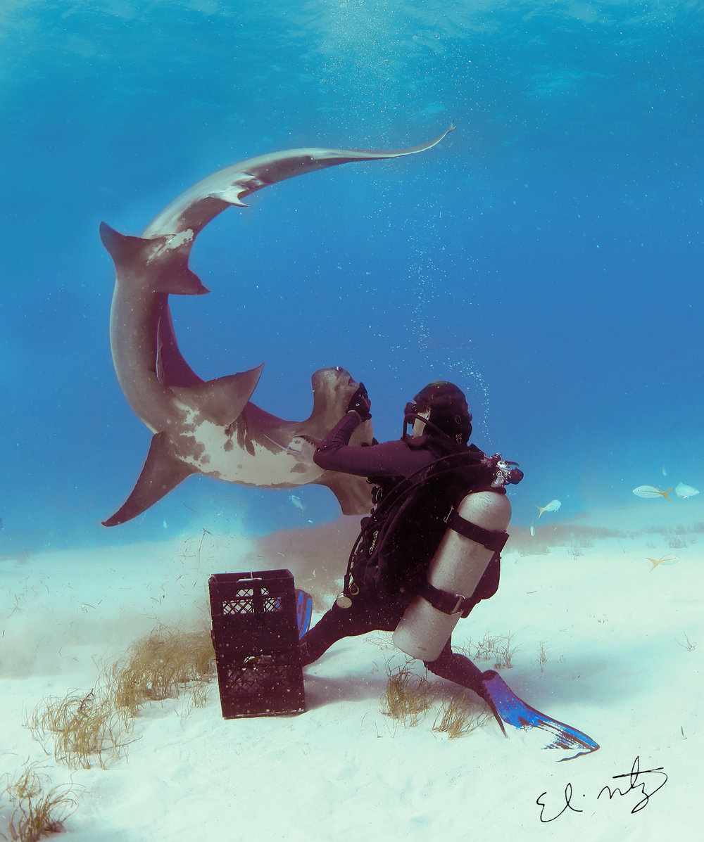 great hammerhead interaction 2.jpg