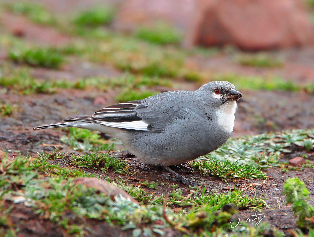 grey bird 2.jpg