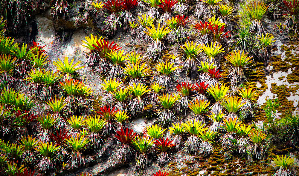 wall plants.jpg