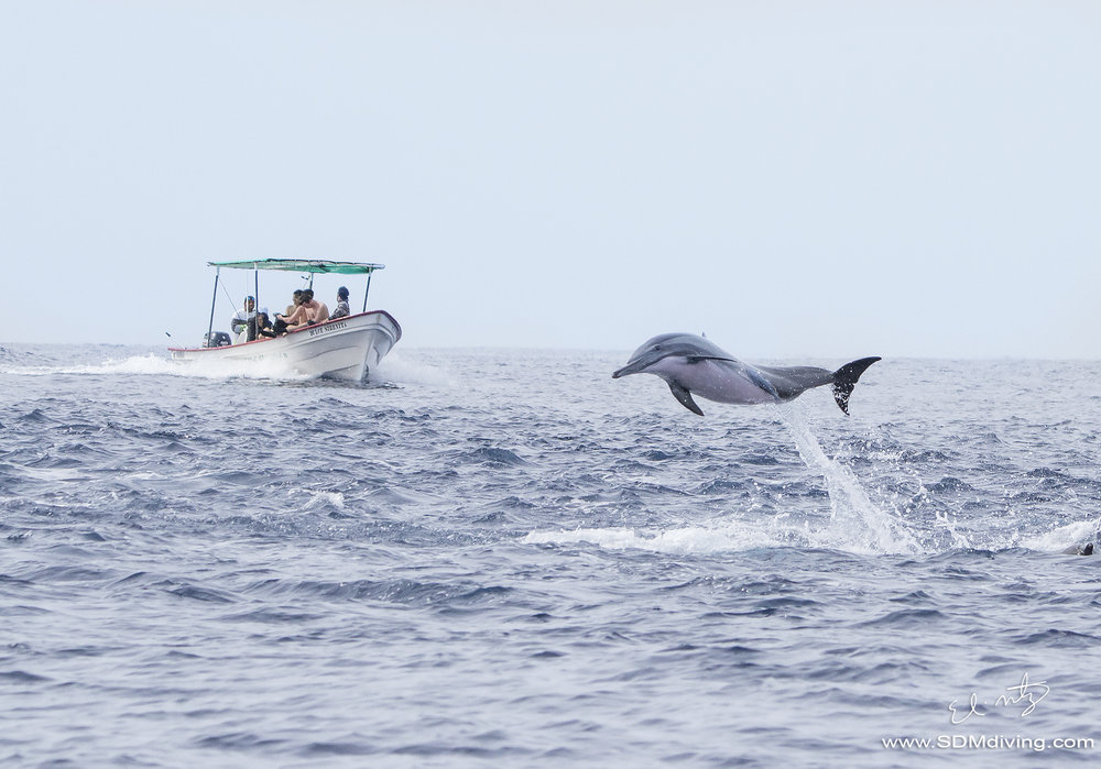 dolphin breach.jpg