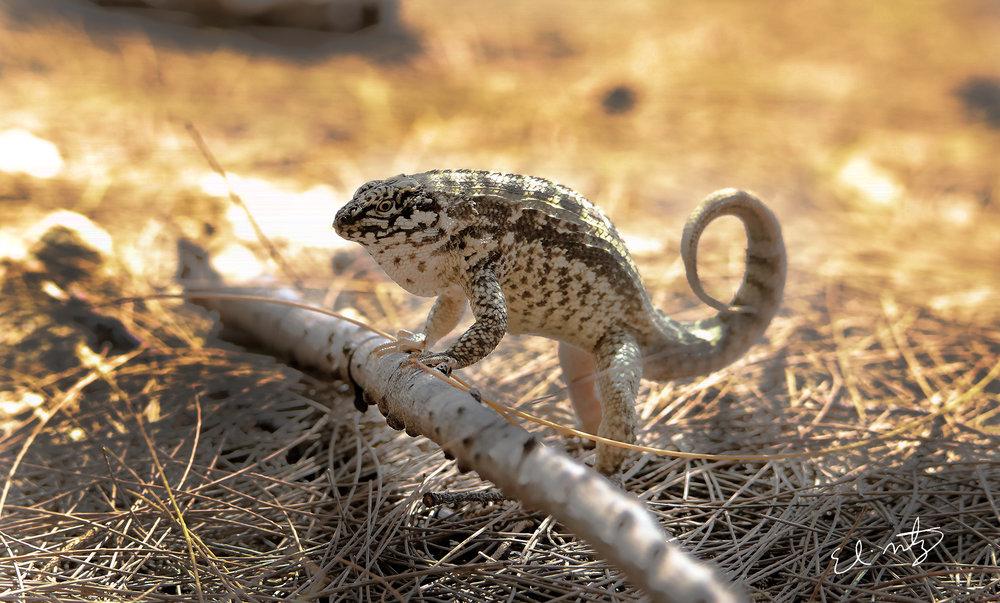 lizard 7.jpg