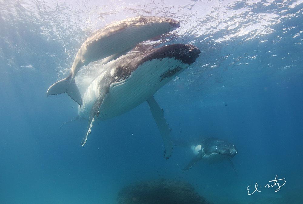 3 whales.jpg