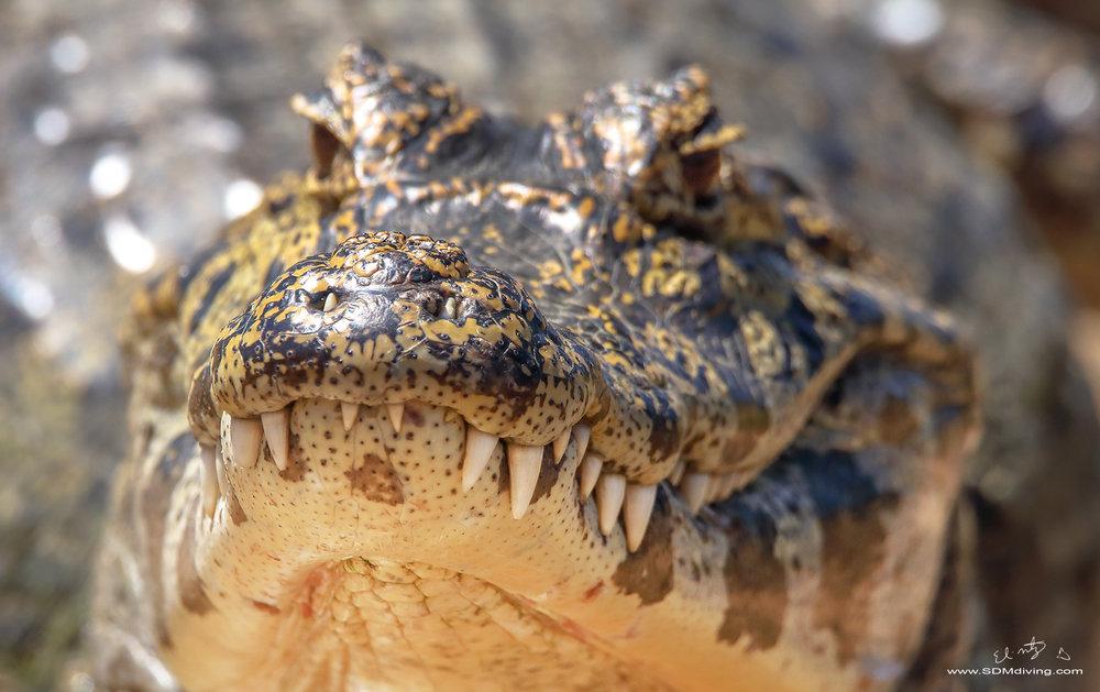 croc face.jpg