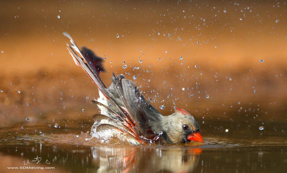 cardinal bath.jpg