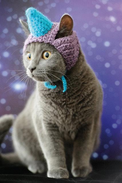 unicorn-cat-hat.jpeg