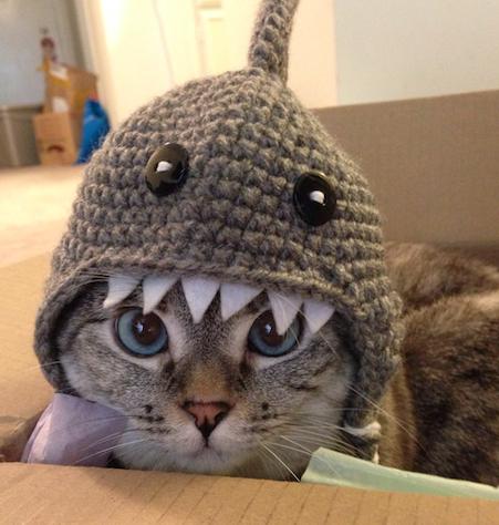 Shark hat.png