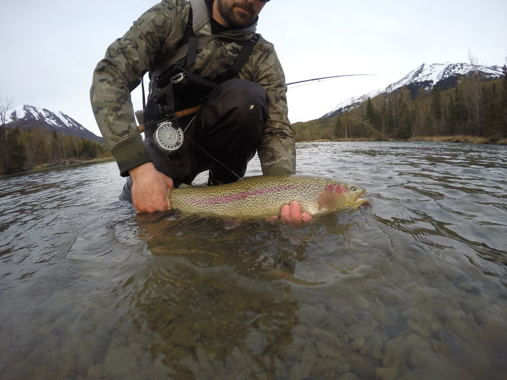 A truly memorable rainbow trout on a swung fly!