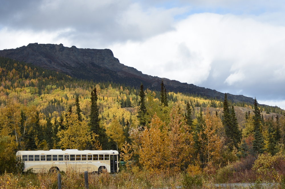 A bus ride through Denail National Park is the best way to see all the park has to offer!