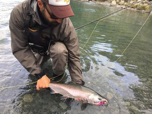 Silver (Coho) Salmon Spey Fishing - PRIME DATES:AUGUST 1ST - OCTOBER 31ST
