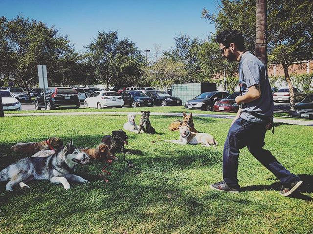 You think the pack is listening to ALAN? 🌟💫🐾 #assitantdogtrainer #assitantwerk #trialday2 #wearehiring #dogtraining #trainingdogs #trialday