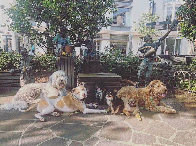 WAIT! How many dogs were at @thegrovela with @tmdb.andre ?! Incredible how the grad pack handled a high distraction environment especially Kenny! Mister Im too 🦀 for the world 🌎 Great job team!  IF YOU SEE US OUT AND ABOUT WORKING OUR PUPS TAKE A PIC AND TAG US! 🐾💫✨ 📷