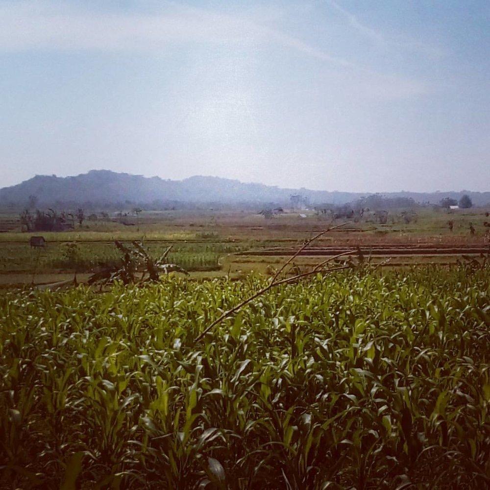 The_Kampung