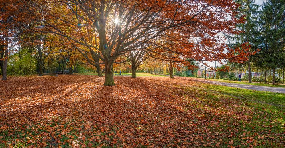 SunnyRoad_AutumnPark_BKP_01s.jpg