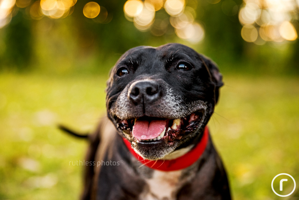 sally-black-staffy4.jpg