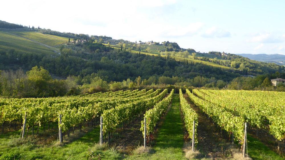 Chianti's vineyards