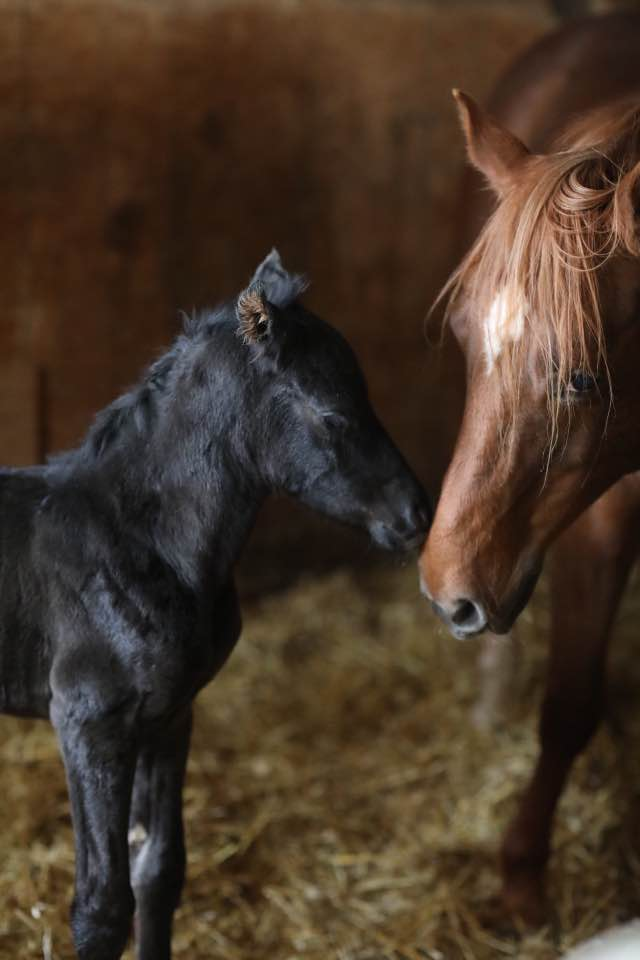 Baby Saige, just a few hours old with her mom, Dolly. Registered Quarter Horses.