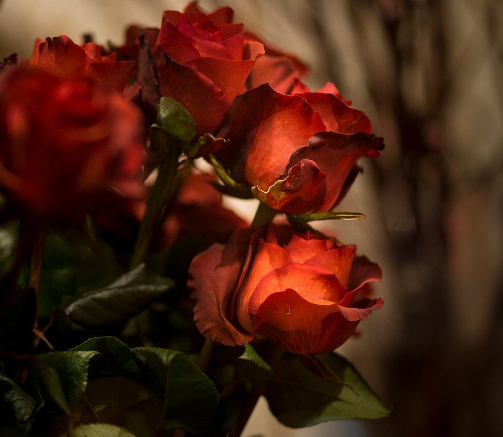 roses-1238.jpg
