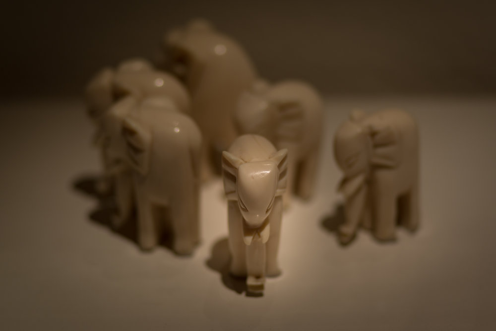 elephants-9207.jpg