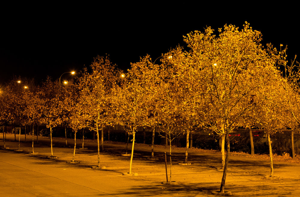 night trees-8348_MR.jpg