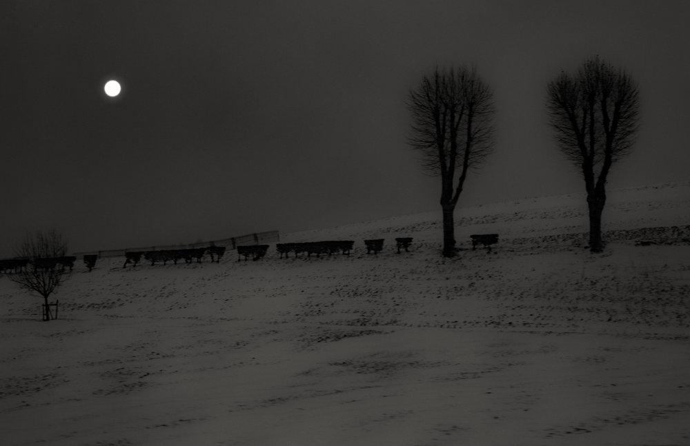 Blizzard-7902.jpg