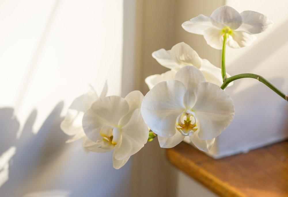 morning  orchids-7532_JPG.jpg