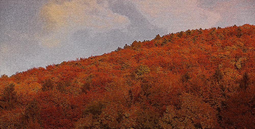 otoño-6744version 2.jpg
