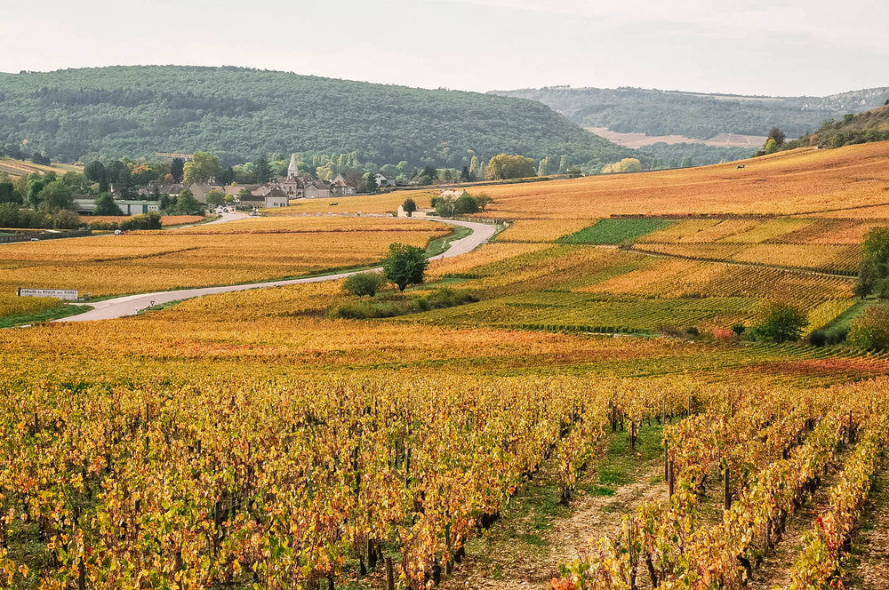 The vineyards that inspired  The Lost Vintage