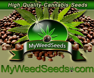 Find High-Quality Cannabis Seeds Here! The best seeds from Canada available here!