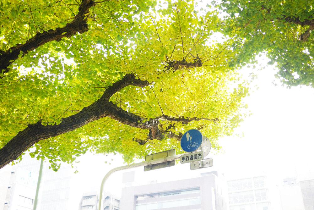 GunawanMelisa_Tokyo2016DayThree18